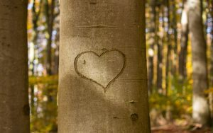 heart-carved-tree