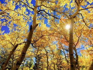 leaves-yellow